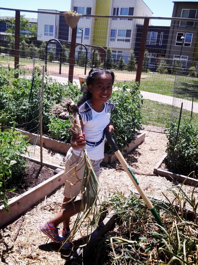 Ta'Jae H. Harvests Garlic