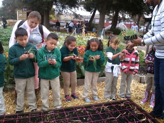 Local school children help ANV plant onions during a field trip!